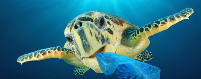 Tartaruga mangia sacchetto di plastica