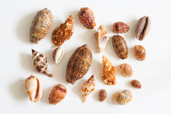 seashell identification and names