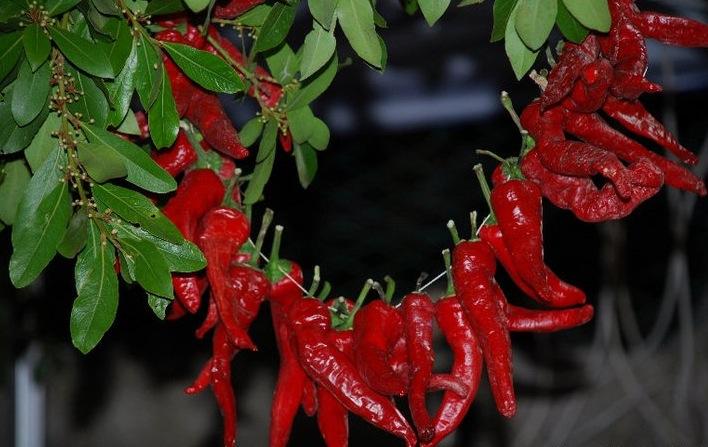 peperone dolce di Altino
