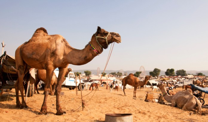 Nagaur Fair, Rajasthan