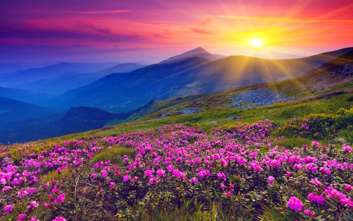 Valley of Flower, India