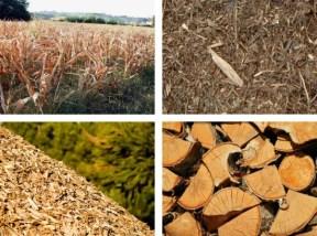 prodotti biomassa