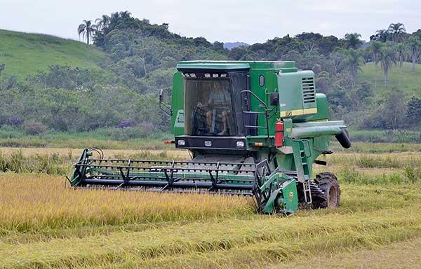 Produtividade do arroz aumenta 40% em Itajaí