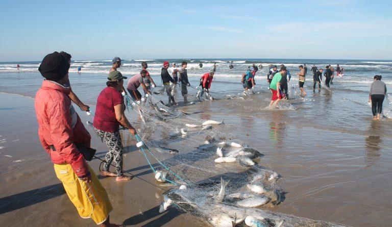 Pescadores fazem a maior captura de tainha do ano do Sul de SC, com 12 toneladas