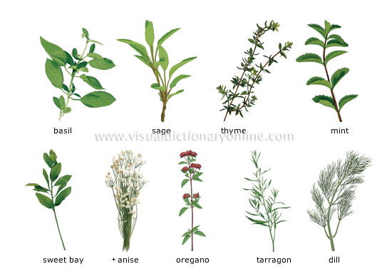 herbs [1] - Visual Dictionary Online