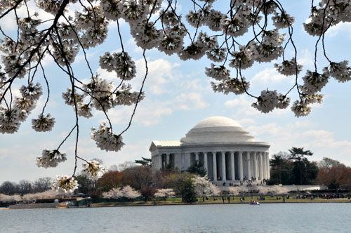 Jefferson Memorial Through the Cherry Blossoms, Washington, D.C.