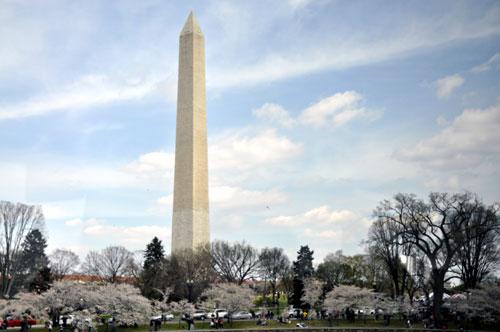 Washington Monument Cherryscape, Washington, D.C.