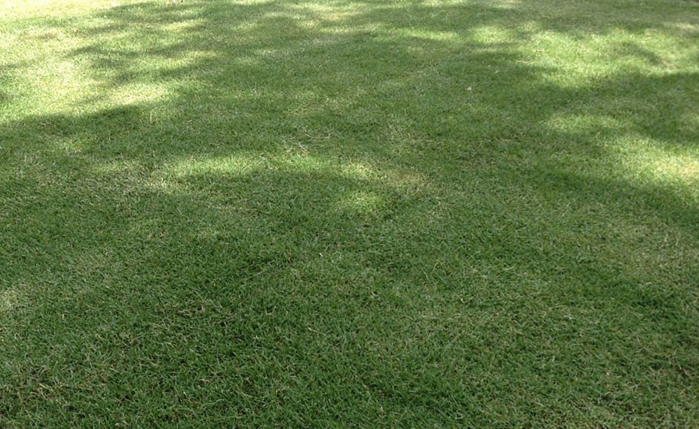 Santa Anna Couch | Instant Lawn