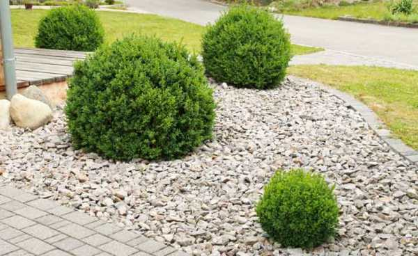 pebbles adelaide landscaping pebble