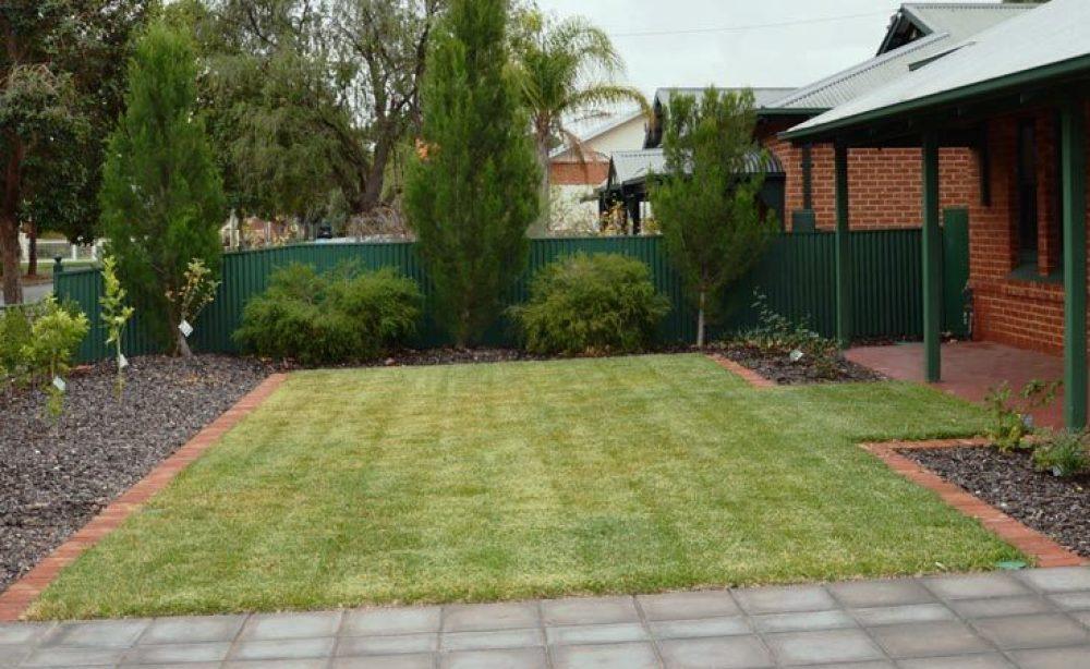 Sir Walter Buffalo Instant Lawn