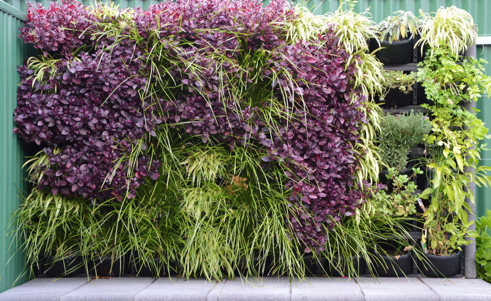 Vertical Garden Feature Wall