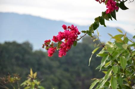 Hawaiis Pflanzenwelt