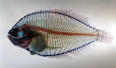 fish, NMNH