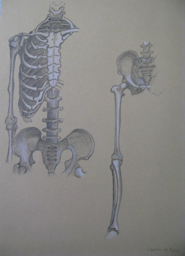 Leonardo da Vinci human skeleton