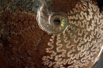 Ammonite Macro: Pattern and Flash. Flickr Commons, User: cobalt123. http://tinyurl.com/zfcmcsa