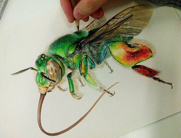 Scientific illustrations by Carim Nahaboo
