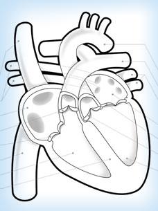 Illustration von Ausmalbildern zu menschlichen Organen