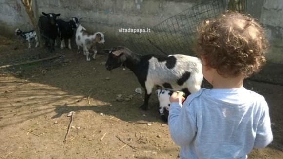 il gnappo che guardava le capre