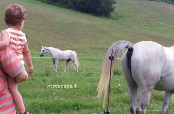 cavallo retro bimbo