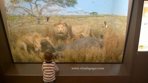 Museo di storia naturale milano bambini animali (12)