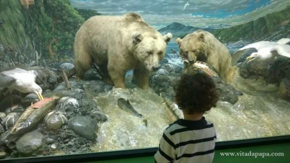 Museo di storia naturale milano bambini animali (2)