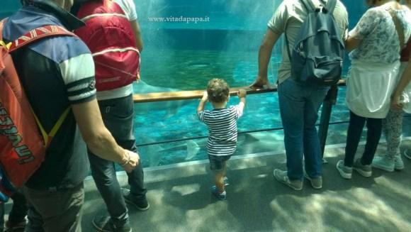 acquario di genova bambini
