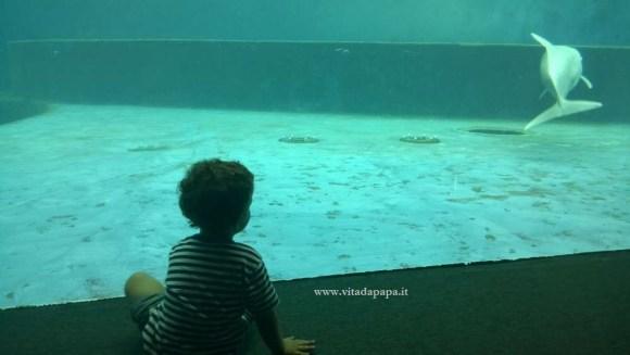 delfini acquario di genova vasca