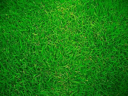 vita di casa  Blog Archive  Un quadro o un giardino