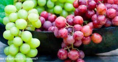 kakvi sa vredite ot grozde