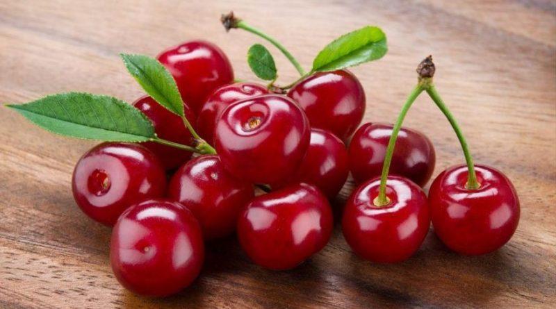 vishna, plodove