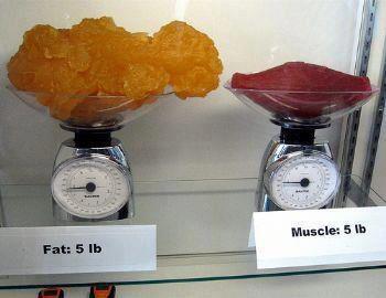 Lemak atau Otot (Muscle)?
