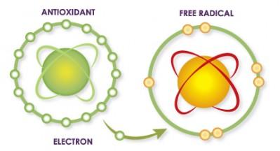 antioksidan dan radikal bebas