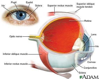 eye-image