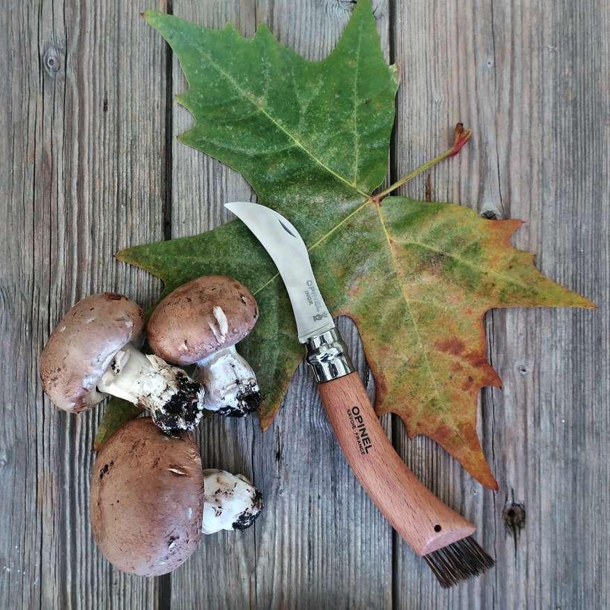 funghi e coltello