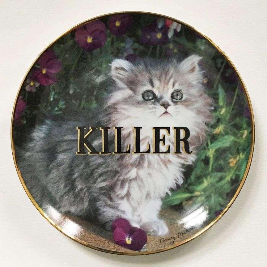 piatto con gatto killer