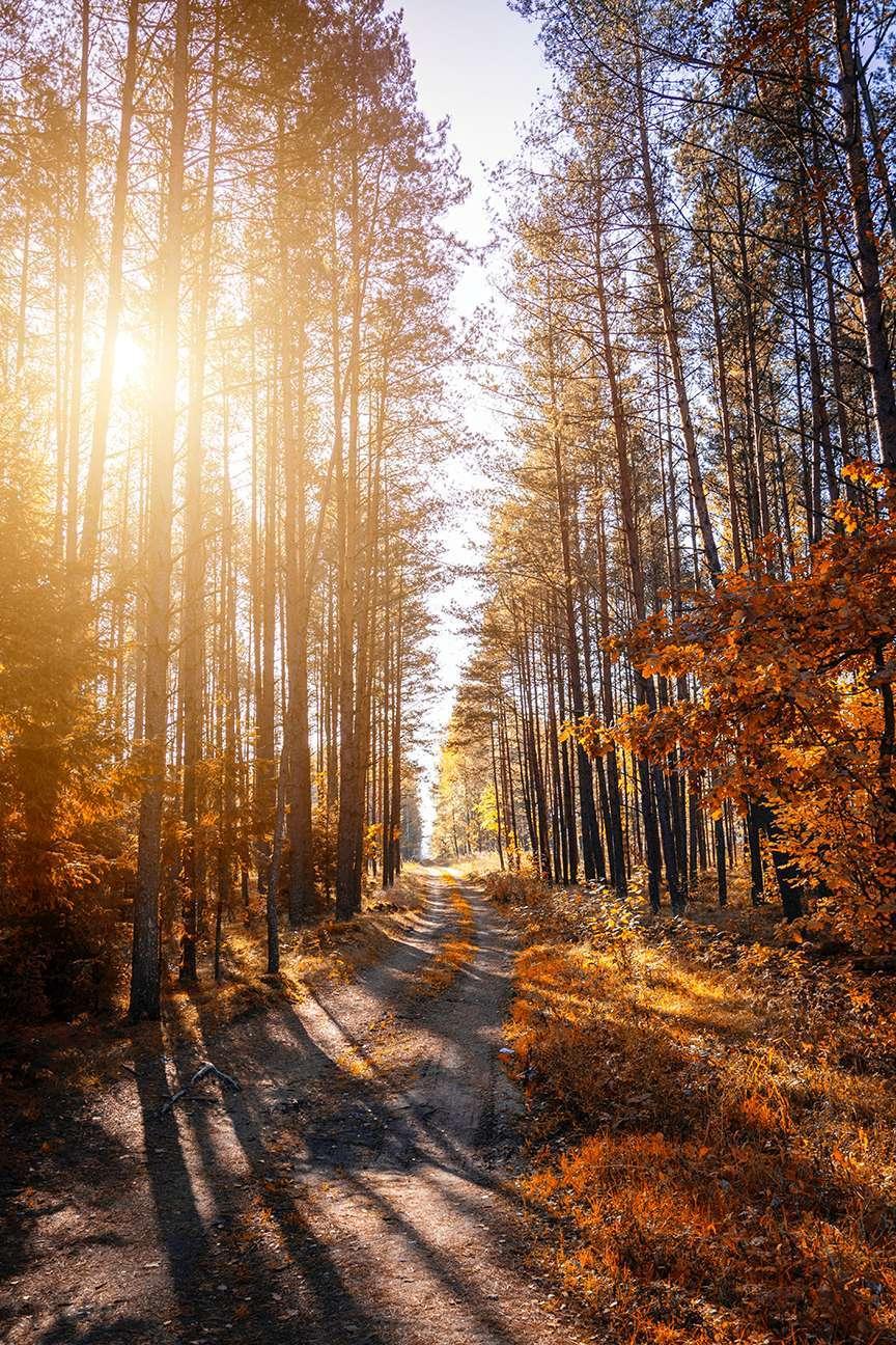 Alberi autunnali con strada nel bosco