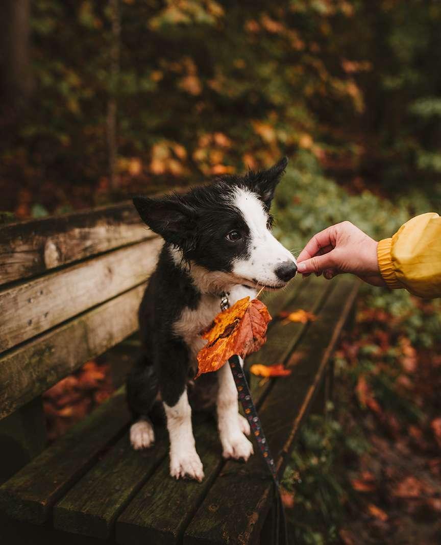 Un cane che gioca con le foglie