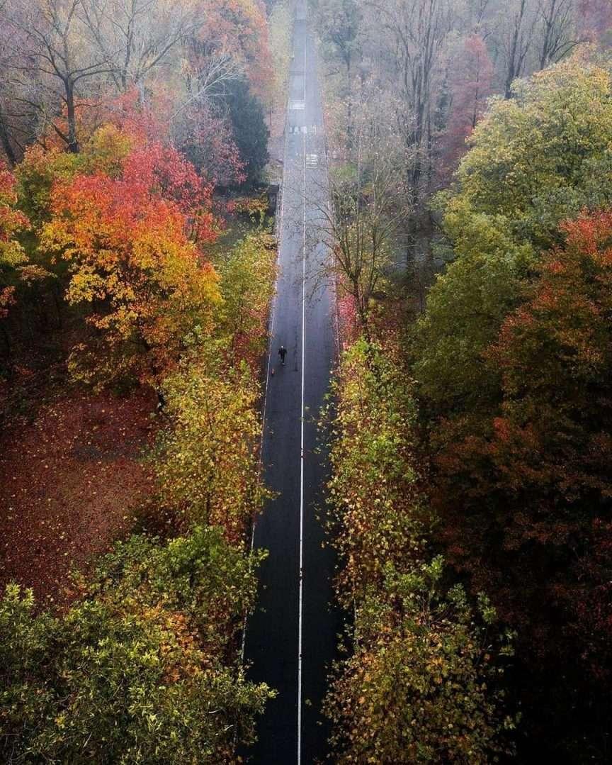 Strada vista dall'alto con foliage autunnale