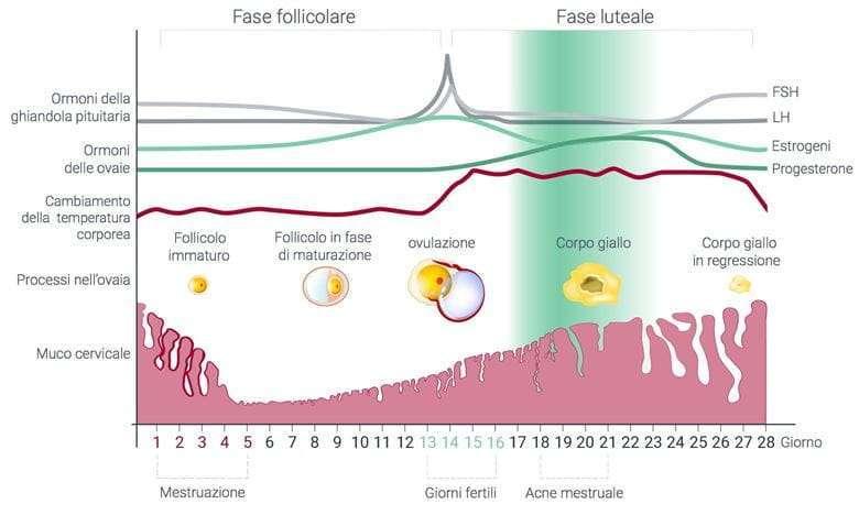 acne ormonale fase mestruale