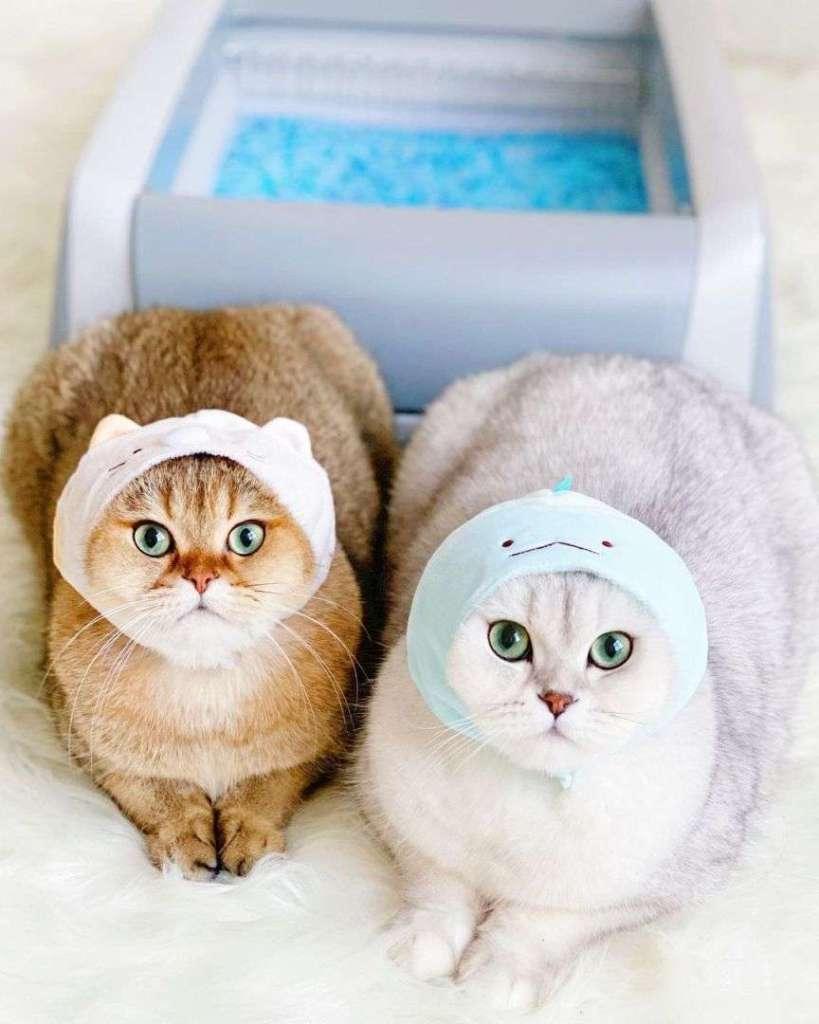 gatti animali domestici