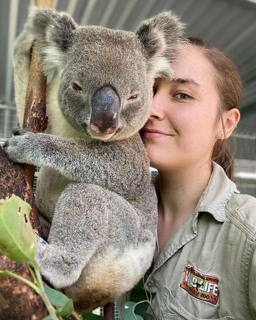 koala cucciolo