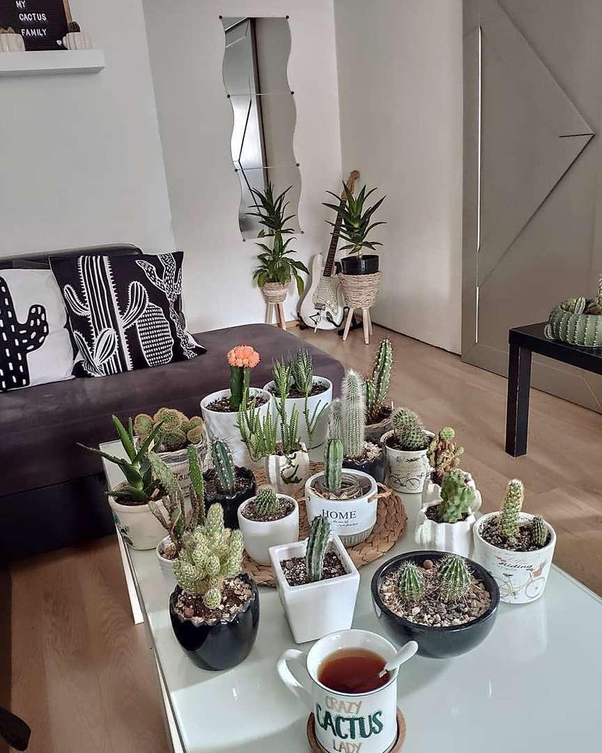 piante grasse d'appartamento