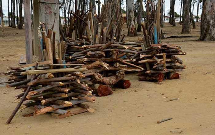 Órgãos ambientais fiscalizam venda de madeira na Paraíba
