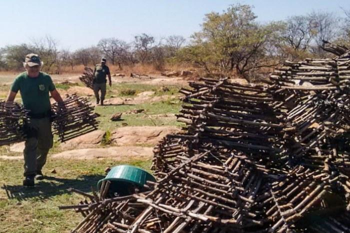 Ibama evita tráfico de cerca de 64 mil aves silvestres na PB