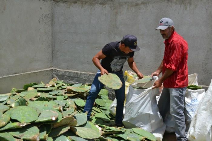 Prefeitura de Monteiro realiza doação de palmas para cooperados da CAPRIBOM