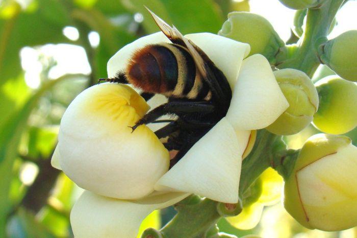 Brasil testa de soro inédito para picadas múltiplas de abelha