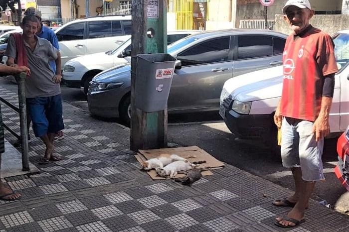 Matança de animais é registrada no mercado da Torre