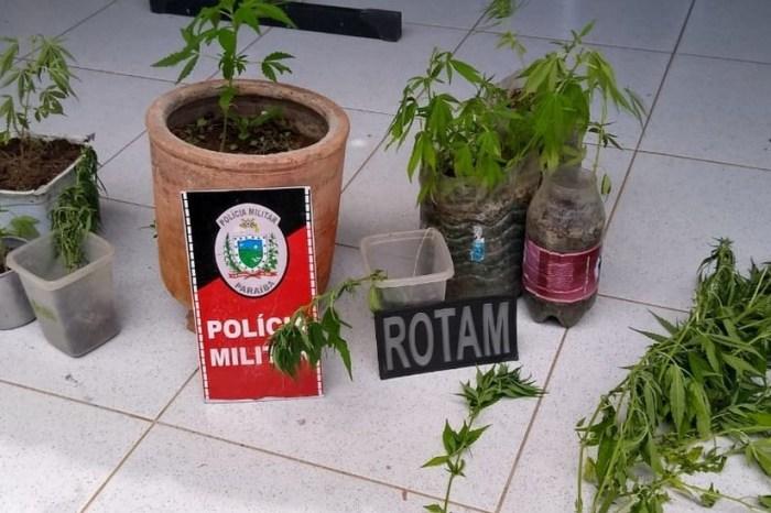Homem é preso suspeito de cultivar maconha no quintal de casa, em Monteiro