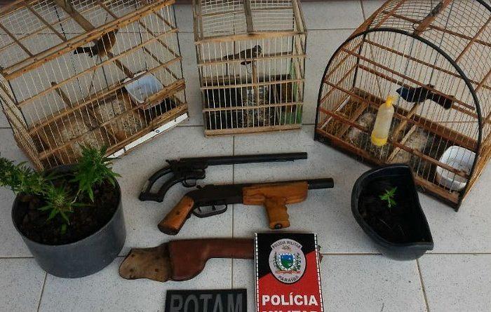PM aborda homem e acaba apreendendo armas, aves e mudas de maconha