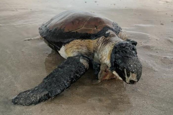 Mais de 180 animais marinhos são encontrados no Litoral da Paraíba